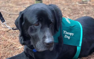 Ollie: Our Therapy Dog